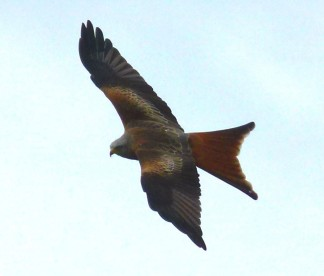 kites-4091 (2)