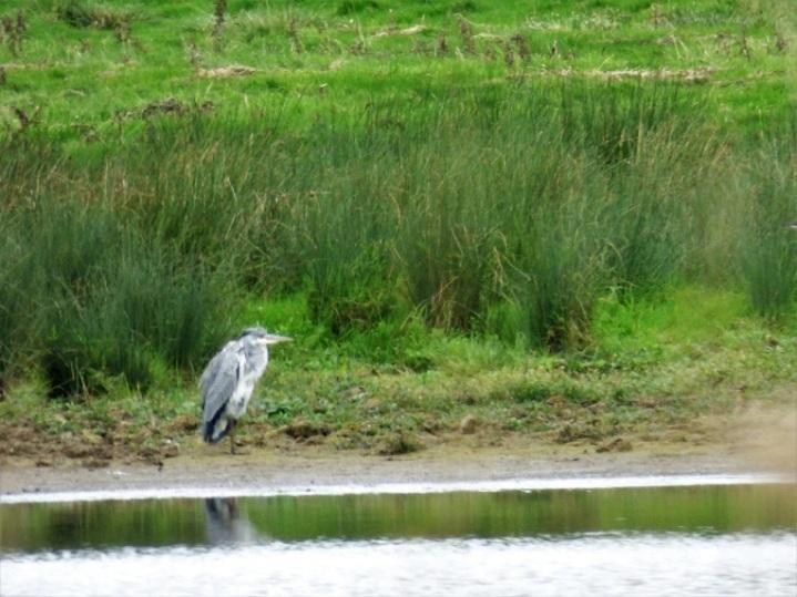 craster-and-dunstanburgh-2